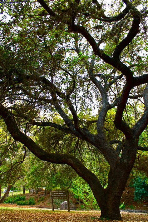 Trees, Treehuggers, and Henri Matisse | Its a Gypsy Life