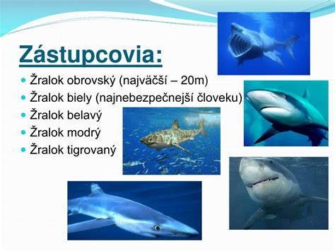 PPT - ŽRALOKY PowerPoint Presentation, free download - ID