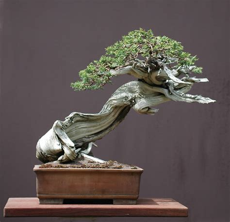 The Art of Bonsai Project - Feature Gallery: The bonsai