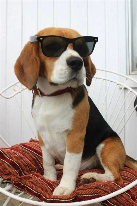 TOP 10 Most Popular Dog Breeds In USA For 2014 - Top Inspired