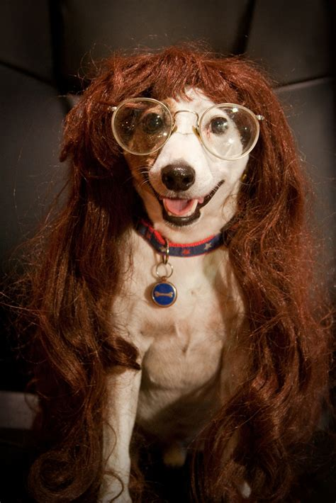 Top 10 Hilarious Dog With Wigs - Top Inspired