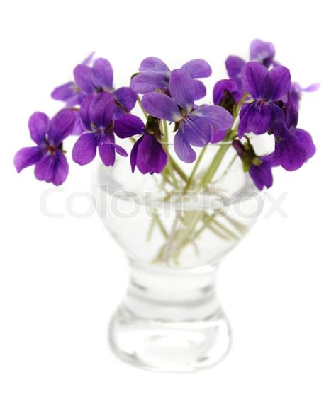 Violets in a vase   Stock Photo   Colourbox